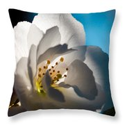 Backlit Cherry Blossom Throw Pillow