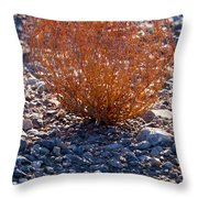 Backlit Color Throw Pillow