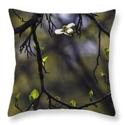 Backlit Dogwood Blossom In Natural Frame Throw Pillow
