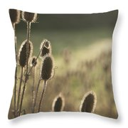 Backlit Teasel Throw Pillow