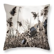 Backlit Winter Reeds Throw Pillow