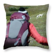 Backpacker Watches Dall Sheep Throw Pillow