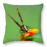 Backside Of Beauty Throw Pillow