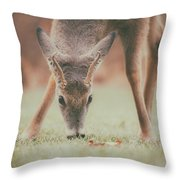 Backyard Beauty Throw Pillow