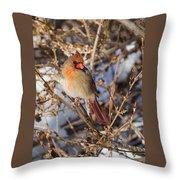 Backyard Birds Female Nothern Cardinal Throw Pillow