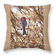 Backyard Birds Male House Finch Throw Pillow