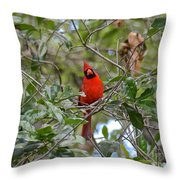 Backyard Cardinal In Tree Throw Pillow