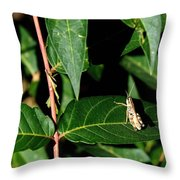 Backyard Hopper Throw Pillow