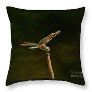 Balancing Dragonfly Throw Pillow