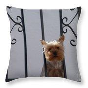 Balcony Dog Throw Pillow