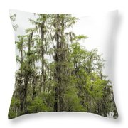 Bald Cypress - Axodium Distichum Throw Pillow