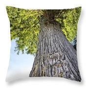 Bald Cypress In Morning Light Throw Pillow