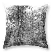 Bald Cypress Swamp In Black And White Throw Pillow
