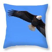 Bald Eagle 3772 Throw Pillow
