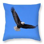 Bald Eagle 3773 Throw Pillow