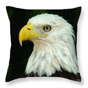 Bald Eagle-42 Throw Pillow