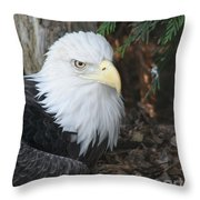 Bald Eagle #3 Throw Pillow