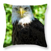 Bald Eagle - Alaska Throw Pillow