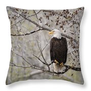Bald Eagle At Belfry Mt Throw Pillow by Roger Snyder