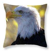 Bald Eagle Beauty Throw Pillow