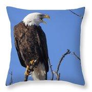 Bald Eagle Calling Throw Pillow