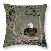 Bald Eagle Calling On Nest Alaska Throw Pillow