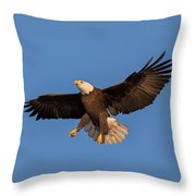 Bald Eagle Christmas Morning Throw Pillow by Everet Regal