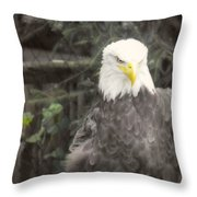 Bald Eagle Throw Pillow by Dawn Gari