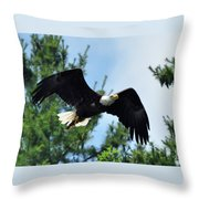 Bald Eagle Feeding 2 Throw Pillow