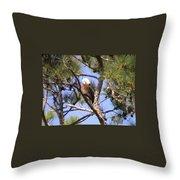 Bald Eagle Grooming Throw Pillow