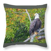 Bald Eagle In Fall Colors Animals Throw Pillow