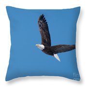 Bald Eagle In Flight 2 Throw Pillow