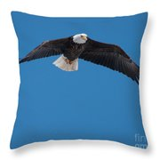 Bald Eagle In Flight 3 Throw Pillow