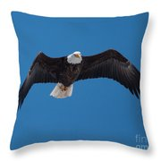 Bald Eagle In Flight 4 Throw Pillow