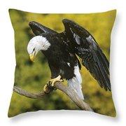 Bald Eagle In Perch Wildlife Rescue Throw Pillow