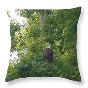 Bald Eagle In Sweetgum Tree Throw Pillow
