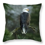 Bald Eagle In Tree Throw Pillow
