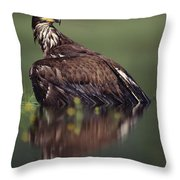 Bald Eagle Juvenile British Columbia Throw Pillow