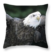 Bald Eagle Landing On Prey Throw Pillow
