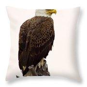 Bald Eagle On A Snag Throw Pillow