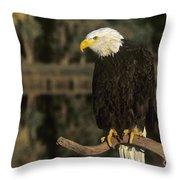 Bald Eagle On Dead Snag Wildlife Rescue Throw Pillow