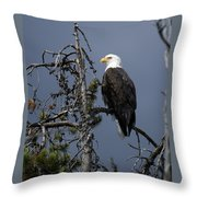 Bald Eagle On Watch Throw Pillow