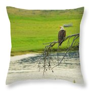 Bald Eagle Overlooking Yellowstone River Throw Pillow