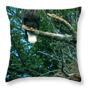 Bald Eagle Poses Throw Pillow