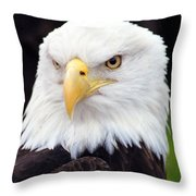 Bald Eagle - Power And Poise 02 Throw Pillow