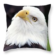Bald Eagle - Power And Poise 03 Throw Pillow
