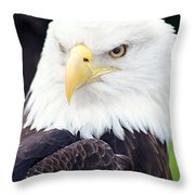 Bald Eagle - Power And Poise 04 Throw Pillow