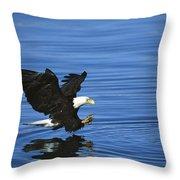 Bald Eagle Striking Kenai Peninsula Throw Pillow