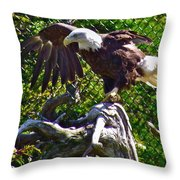Bald Eagle With A Broken Wing In Salmonier Nature Park-nl Throw Pillow