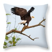 Bald Eagle With Fish Throw Pillow